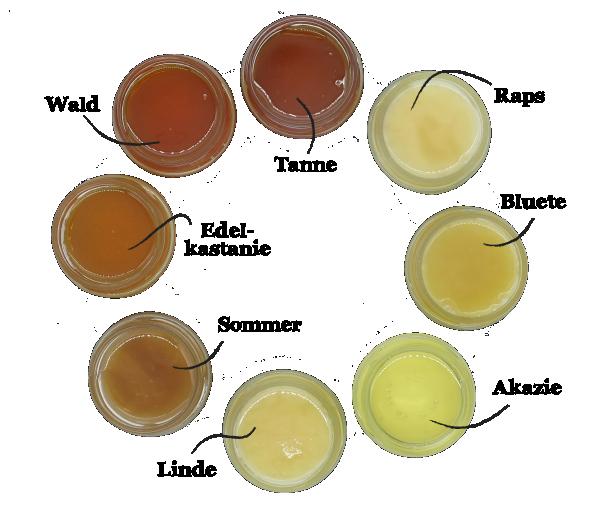 Bienenwissen Bioland Honig