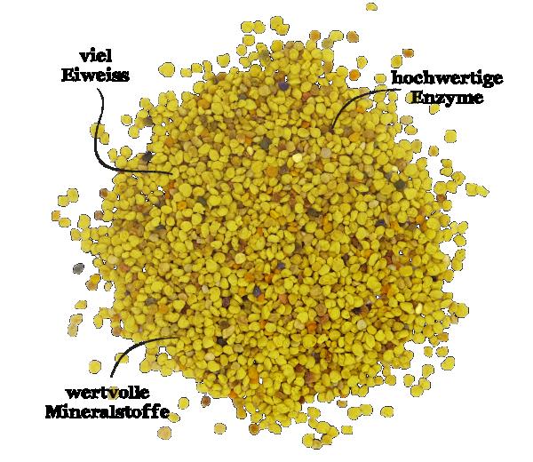 Bienenwissen Bioland Blütenpollen