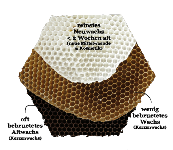 Bienenwissen Bioland Wachs