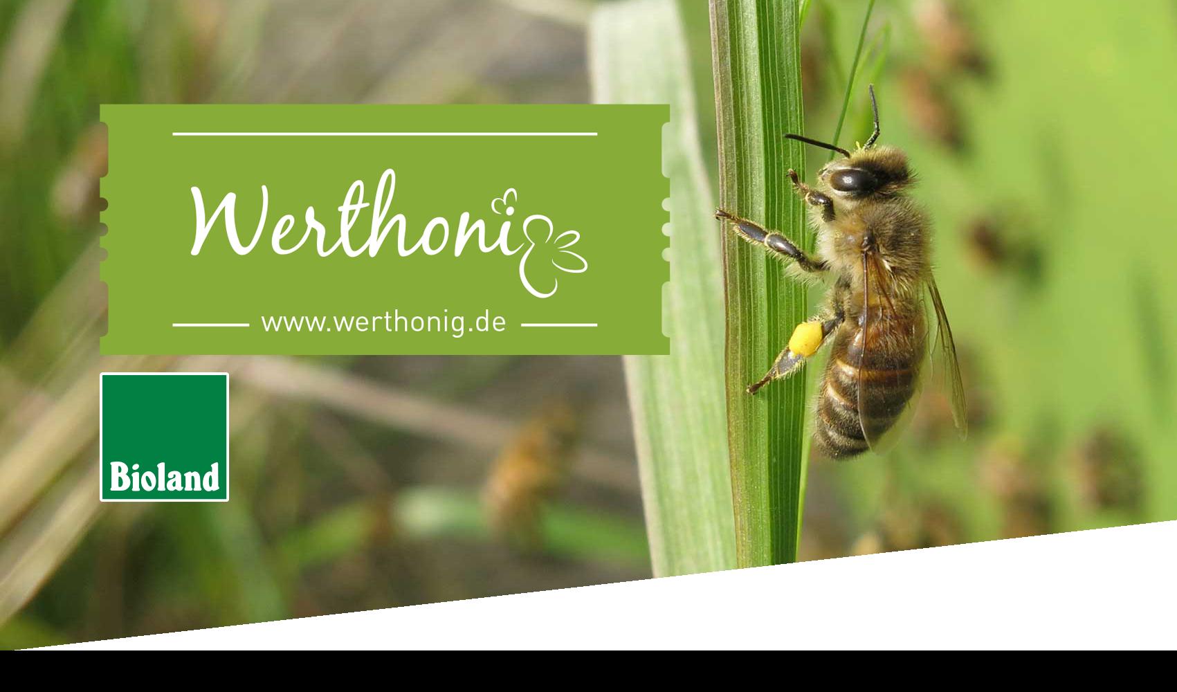 Hintergrund mit Biene